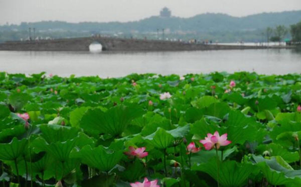 中国八大吃货天堂城市,武汉排名第二(三鲜豆皮/鸭脖)
