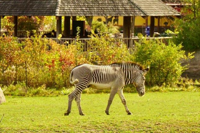 世界最大的动物园排名 第一名来自德国,北京动物园位列第四