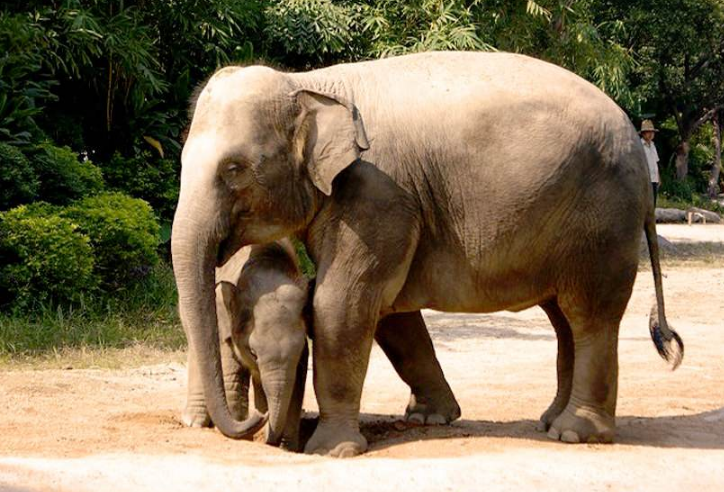 全国野生动物园排名 带你感受最原始的大自然