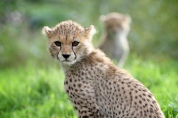 全球七大动物园排名 圣地亚哥动物园美国最大,第二无栅栏