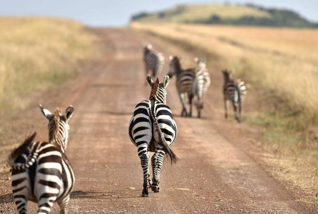 世界野生動物園排名 第一名為世界遺產,你去過嗎
