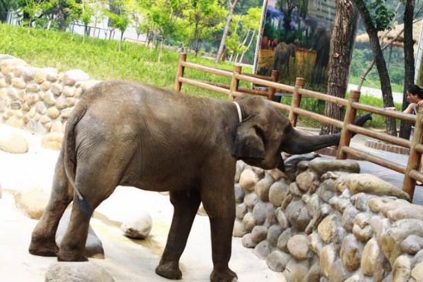 全国动物园排名 国内最受欢迎的动物园
