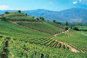 智利最好的酒庄是哪些?智利十大酒庄排名