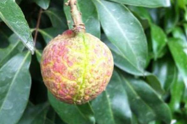全球最贵十种水果