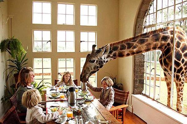 世界十大动物主题酒店