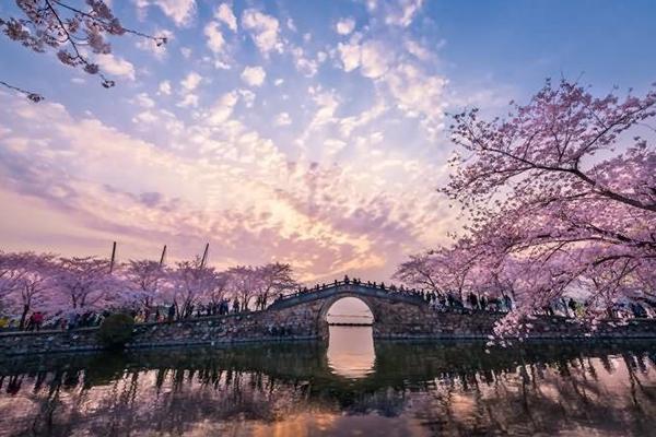 中国三大赏樱胜地