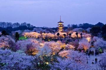 中国三大赏樱胜地:湖北除了武大还有另一地点上榜