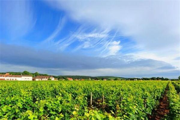 世界三大葡萄酒产地,法国/德国/西班牙
