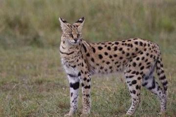 世界十大最美貓咪:有的優雅有的軟萌,你最喜歡哪一種?