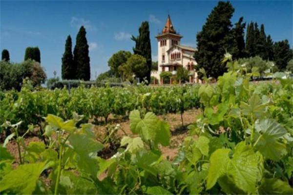 世界葡萄酒十大产区,尼亚瓜上榜,开普规模属南半球最大