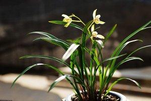 世界上十大名花:雍容华贵的牡丹上榜 你都养过几种?