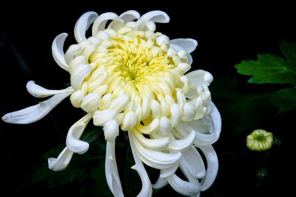 世界上十大名花