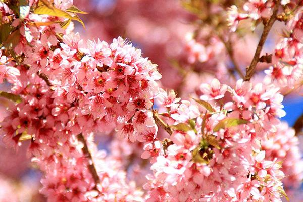 世界上十大最美丽花朵