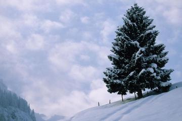 世界十大园林树木:银杏上榜 世界十大园林树木都有哪些