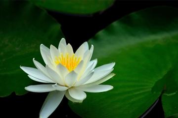 世界上十大最美丽花朵:或清丽或妖娆 有你喜欢的花上榜吗