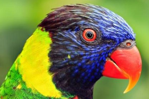 世界十大濒危鸟类