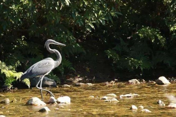 世界十大濒危鸟类:第二名已好几十年没人见过,第一名是它