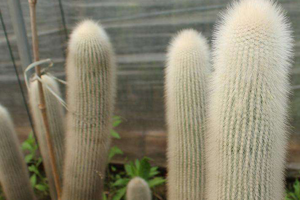 世界十大特殊植物