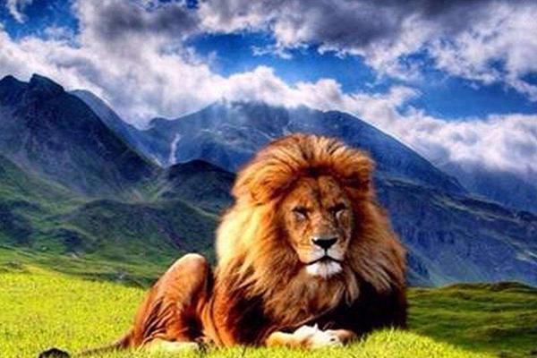 世界上十大动物明星