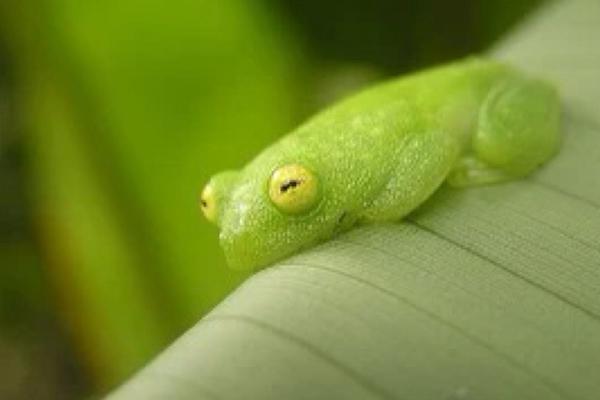 世界十大怪异青蛙