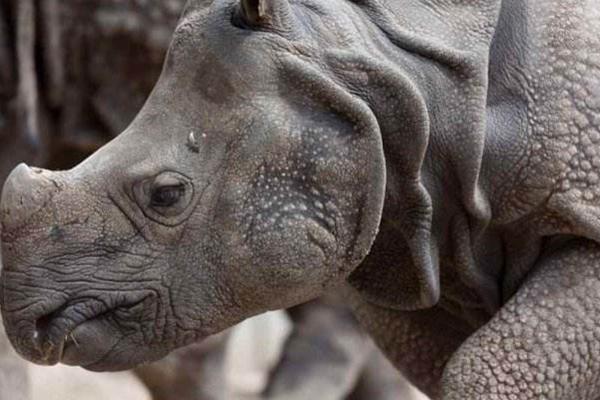 世界上十大珍稀动物