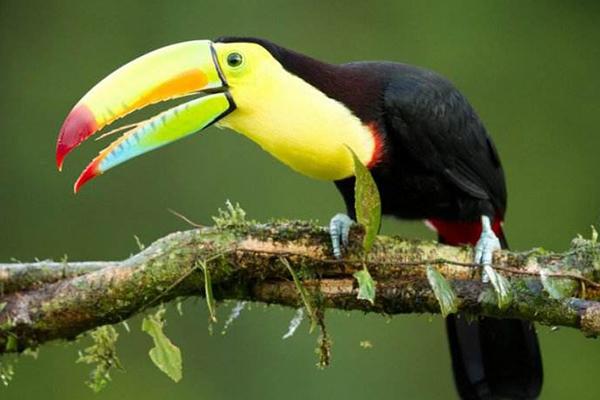 世界十大最美丽的鸟