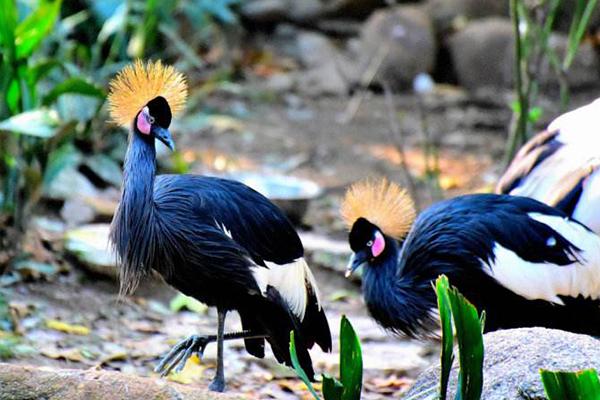 世界十大最美鸟类