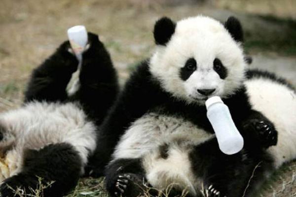 中国十大濒危物种