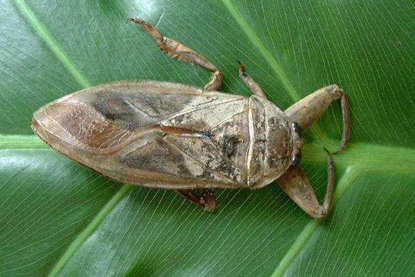 最恶心的十大昆虫