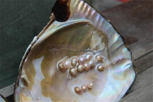 来海南必买的十大特产,陵水珍珠上榜,海产干货喜欢就别错过