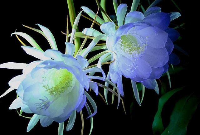 世界十大最美的花 秋英第一,昙花仅列第三