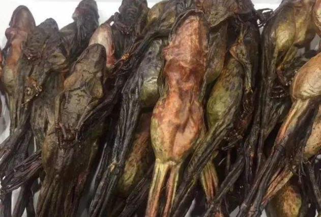 世界十大最贵的食物 神户牛肉位列第一,你吃过几种呢