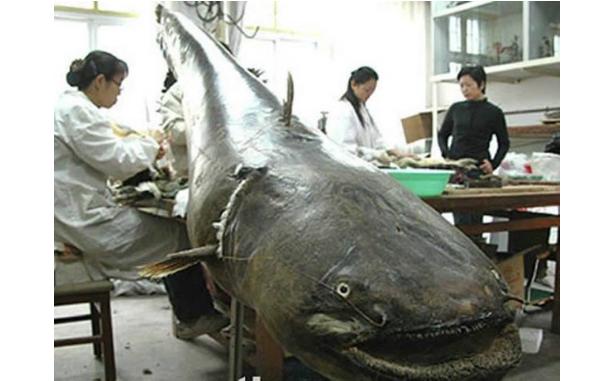 世界最凶猛的十大淡水鱼 第一能咬断人的手指,第五力大无穷