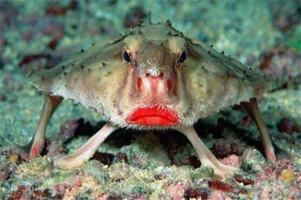 世界十大最丑的动物 安康鱼不仅丑还有点小瘆人