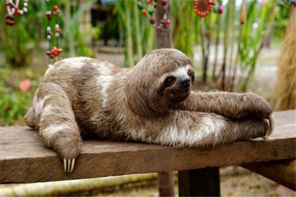世界最懒的十大动物 树懒遇危险都懒得跑,第四走一步要十几秒
