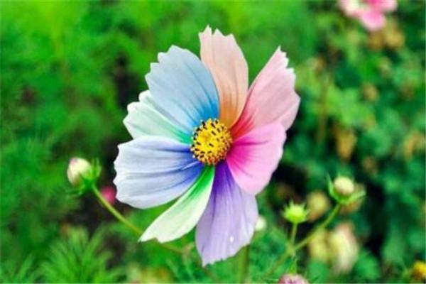 世界十大最神奇的植物 大花草味道像腐肉,卷柏居然能复活