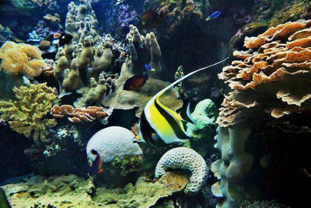 世界十大珊瑚礁 带你领略不一样的海底世界