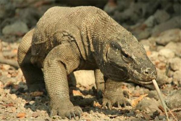 世界十大最凶猛动物 河马一口能咬死鳄鱼,猎人最怕巨型野猪