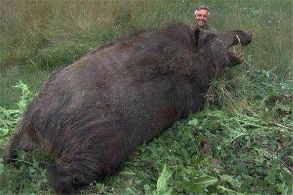 狮子咬死鳄鱼_世界十大最凶猛动物 河马一口能咬死鳄鱼,猎人最怕巨型野猪 ...