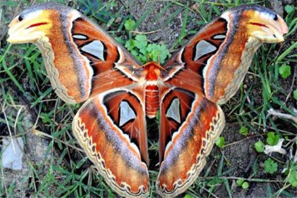 世界十大奇特的昆虫 叶虫好像有变身的能力,第四像外星人