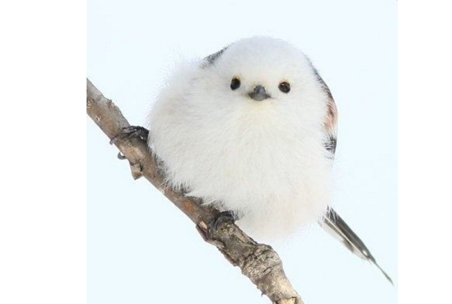 世界十大最可爱的动物 萌化你的心,个个都是小可爱