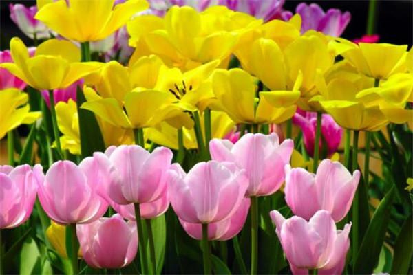世界最美的十大名花 昙花上榜,富丽堂皇的牡丹你喜欢吗
