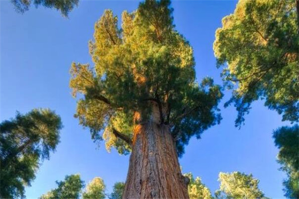 世界十大怪树 榕树能一树成林,第八看着像是被台风刮倒了