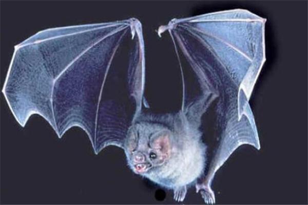 世界十大罕见动物 玻璃蛙能看到内脏,长耳跳鼠像是米老鼠