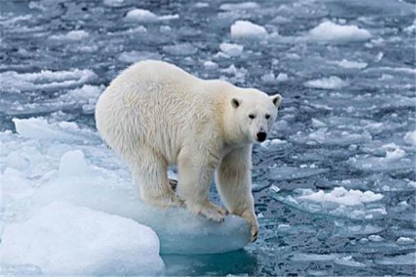 世界十大最美动物 斑马上榜,第三是北极圈的原住民