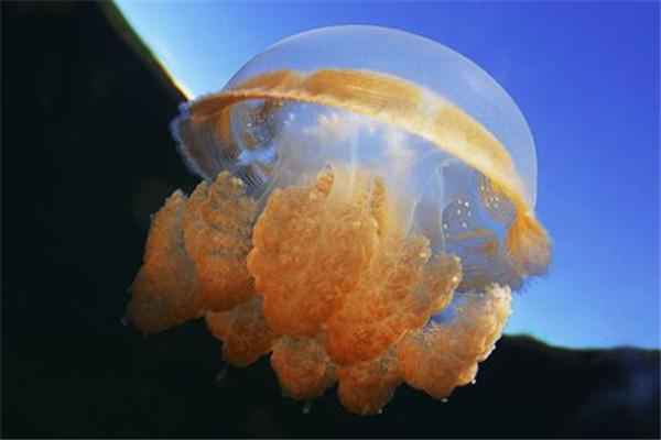 世界十大古老动物 蝌蚪虾长相丑陋,七鳃鳗会引起极度不适