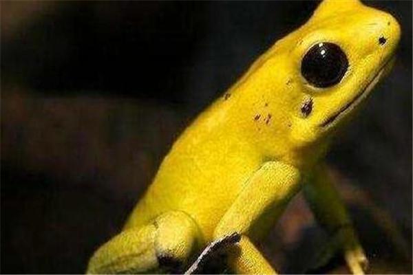 世界十大杀人动物 遇箱形水母能躲则躲,毒镖蛙一次能致死十人