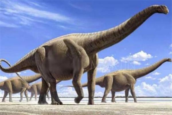 世界十大最大动物 鸵鸟上榜,易碎双腔龙比蓝鲸还长