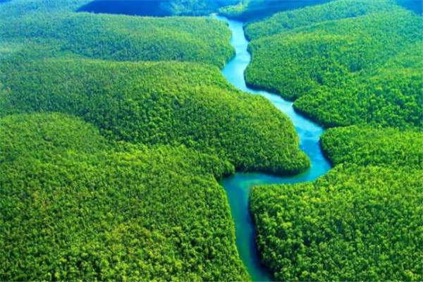 世界最迷人的十大森林 佐加野竹林宛如画卷,最后是地球之肺