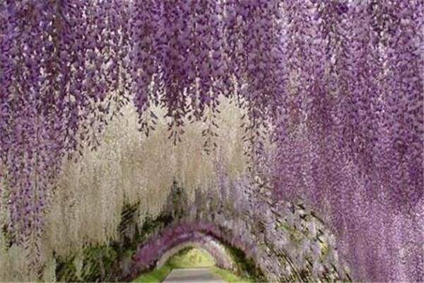 世界最美的十大树隧道 乌克兰爱的隧道一定要去